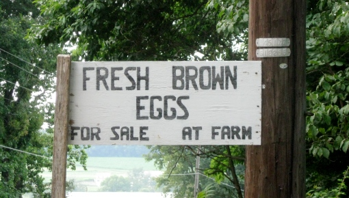 Fresh Eggs at Country Meadows Farm