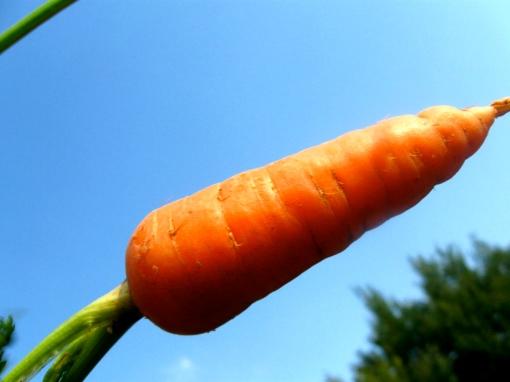 Killer Carrot